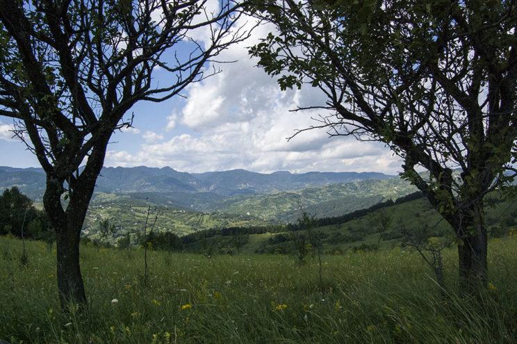 Valea Slănicului